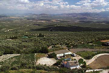 Die Aussicht auf Olivenfelder vom Mirador Glorieta Alferez