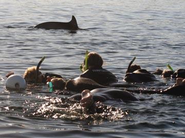 Auf einer Swim with Dolphins Tour , die im Hafen Glenelg startet