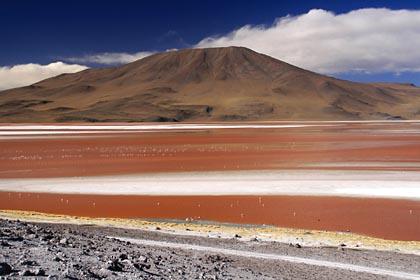 Die rot schimmernde Laguna Colorada im Hochland Boliviens