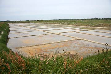 Salzgärten von Guerande
