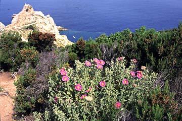 Insel Elba Bild 149 am Monte Enfola