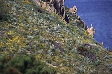 Insel Elba Bild 150 Möwenfelsen am Monte Enfola