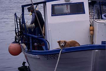 Insel Elba Bild 342 auf einem Fischerboot