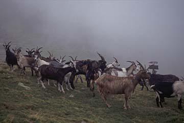 Fernwanderweg E5 - Bild 0294 beim Aufstieg zum Hirzer, Begegnungen im Nebel