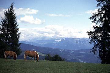 Fernwanderweg E5 - Bild 0360 von Lafenn nach Jenesien mit Blick zu den Dolomiten