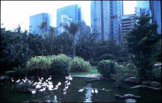 ein Park bei Tsim Sha Tsui, Hong Kong
