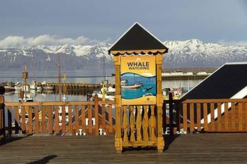 Einladung zum Wale-Watching in Husavik, Nordisland