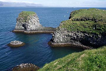 Vogelbrutgebiet auf den Felsen bei Arnarstapi, Halbinsel Snaefellsnes, Island, Westen
