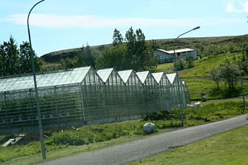 viele Gewächshäuser im Geothermalgebiet bei Reykholt, Südisland