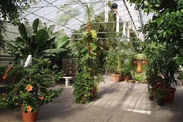 "Hveragerdi, im Palmengarten ""Eden"", Südisland"