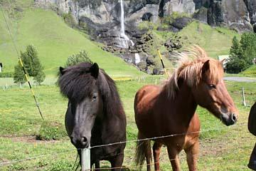 bei Kirkjabaejarklaustur im Süden von Island