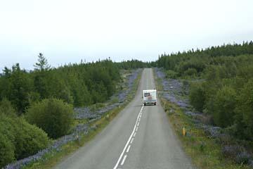 Straße bei Hallormstadur, aufgeforstetes Gebiet beim Lagarfljot, Ostisland