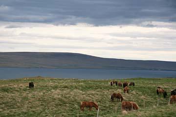 Szene im Norden von Island