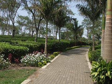 an der Teeplantage nördlich von Malang, Java
