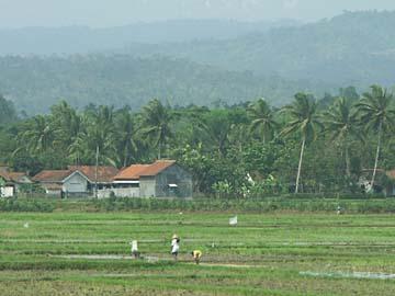 typischer Ausblick auf der Strecke zwischen Yogyakarta und Bandung auf Java