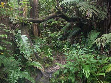 beim Rundweg um den Tangkuban Prahu entdeckt man den Dschungel in Westjava