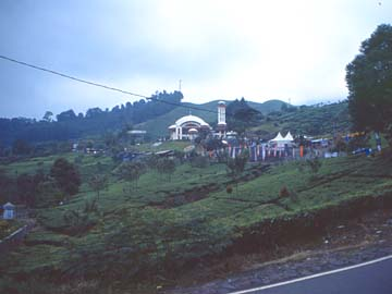 am Puncak Paß in Westjava wird viel Tee angebaut, Indonesien