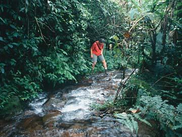 am Mt. Salak geht es hin und her über den Bach, Java, Indonesien