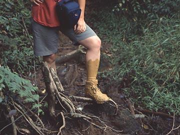 ein kleiner Tritt in den Schwefelschlamm, Dschungel-Tour am Mt. Salak, Indonesien