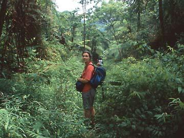 quer durch den Urwald am Mt. Salak im Westen von Java, Indonesien