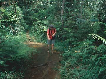der Stock hilft beim Abstützen über den Schlammlöchern am Mt. Salak, Java