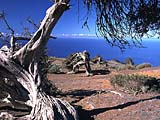 der Wacholderbaumwald El Sabinar auf El Hierro, kanarische Inseln