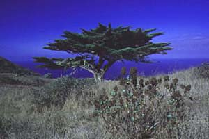 El Hierro Bild 111, Kanaren