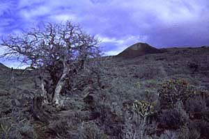 Wandern in der Dehesa, El Hierro