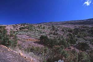 El Hierro Bild 358