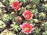 der botanische Garten auf Gran Canaria, Kanaren