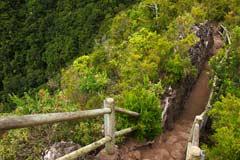 Ein Wanderweg durch das grüne La Palma