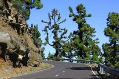 Eine Bergstraße hoch zum höchsten Berg der Insel La Palma