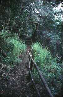 ein Wanderweg im Nordosten von La Palma, Kanaren