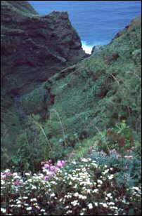 Schlucht bei Punta Gorda, La Palma, Kanaren