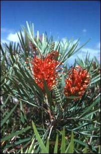 Pflanzen am Wegesrand beim Wandern auf La Palma