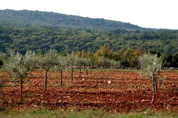 rote Erde an der Westküste von Istrien, Kroatien