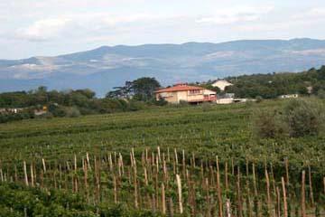 Weinanbau, Insel Krk, Kroatien
