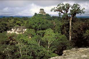 Aussicht vom Tempel IV über den Urwald und die Anlage von Tikal in Guatemala
