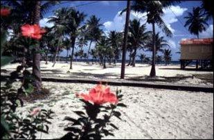der Strand von Placencia, Belize
