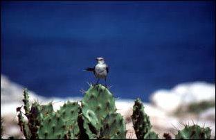 ein Vogel auf der Isla Mujeres in Yucatan, Mexiko