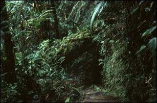 Am Biotopo del Quetzal in Coban, Guatemala