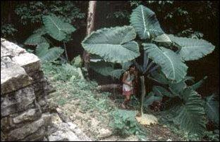 überwältigende Natur um die Maya Ruinen herum, Palenque, Mexiko