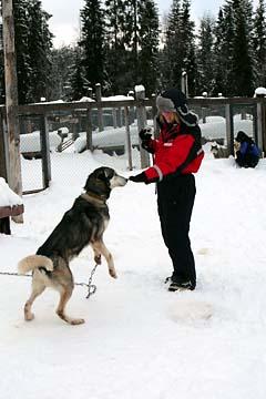 Unser erster Kontakt mit den Huskies