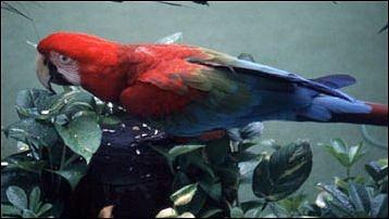 Papageien im Jurong Bird Park, Singapur