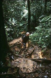 jungle trekking in den Cameron Highlands, Malaysia