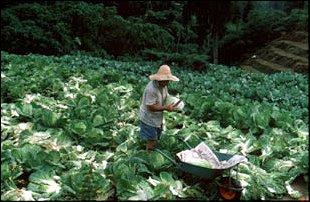 Ernten wie im Paradies, Malaysia