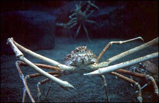 die Unterwasserwelt von Sentosa, Singapur