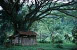 Landschaft im Bundesstaat Perlis im Norden Malaysias
