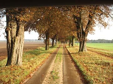 Mecklenburg-Vorpommern, herrliche Allee