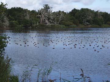 Warnker See, Vogelbeobachtungen